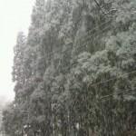 でっかい雪